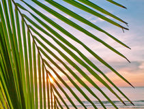 Leaves of palm on sunset Royalty Free Stock Image