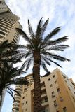 Through leaves of a palm tree. Beautiful high palm trees grow about new multi-storey houses on seacoast stock image