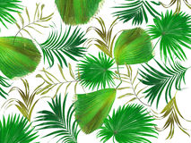 Leaves of palm tree background Stock Photos