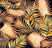 Leaves of palm tree on black stock images