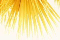 Palm Leaves Branches Sun Light Natural Background. Leaves of a palm tree in bright sunlight. Vintage Background Royalty Free Stock Image