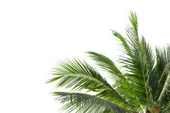 Leaves of palm tree or coconut isolated on white Royalty Free Stock Photos