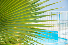 Leaves of palm tree in front of a pool. Stock Photo