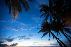Leaves of palm tree over sunset sky Stock Photo