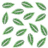Leaves of a palm tree, seamless pattern. Watercolor illustration. Seamless pattern with palm fronds on a white background. Suitable for fabric, packaging, cover Royalty Free Stock Images