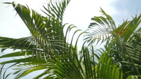 Leaves of the palm tree on the sky background. slow motion. 1920x1080. A sunny day in the warm South. leaves of the palm tree on the sky background. slow motion stock video