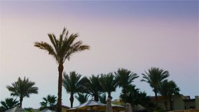 The leaves of a palm tree sway in the wind against the backdrop of a bright sky.  stock video footage