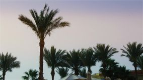 The leaves of a palm tree sway in the wind against the backdrop of a bright sky.  stock video