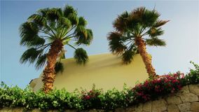 The leaves of a palm tree sway in the wind against the backdrop of a bright sky.  stock footage