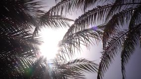 Leaves from a palm tree to sway in the wind a bright light from the sun shines. Close up. Leaves from a palm tree to sway in the wind a bright light from the sun stock video footage