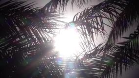 Leaves from a palm tree to sway in the wind a bright light from the sun shines. Close up. Slow motion