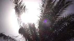Leaves from a palm tree to sway in the wind a bright light from the sun shines. The weather is clear and sunny stock footage