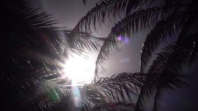 Leaves from a palm tree to sway in the wind a bright light from the sunset. Close up. Leaves from a palm tree to sway in the wind a bright light from the sun stock video
