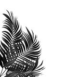 Leaves of palm tree : tone black and white Stock Photography