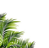 Leaves of palm tree Stock Image