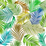 Leaves of palm tree on white background Stock Images