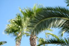 Leaves of a palm trees. Against blue sky Royalty Free Stock Photo