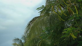 The leaves of palm trees on a sky background. Out of the car stock footage