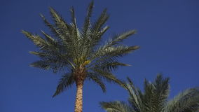 Leaves on palm trees stir from the wind. On a sunny summer day stock video footage