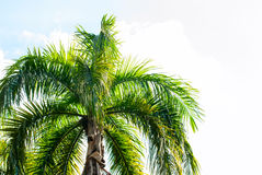 Leaves of Palm Trees in Sun Light. Natural Background Stock Photos