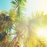 Leaves of Palm Trees in Sun Light. Natural Background for Holiday Travel Card. Toned Royalty Free Stock Images