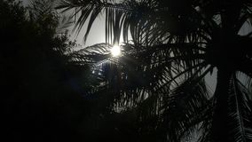 Leaves of palm trees in sunlight. 4k stock footage