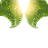 The leaves of palm trees at sunrise on a white background. illustration. The leaves of palm trees at sunrise on a white background. Vector illustration Stock Photo