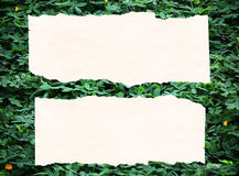 Leaves paper background Royalty Free Stock Image