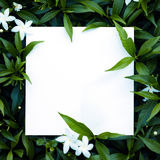 Leaves with paper card note stock photos