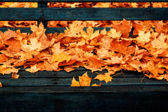 Leaves on Park Bench Stock Images
