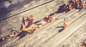 Leaves on a park bench, sunshine royalty free stock photography