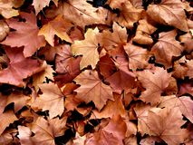 Leaves in a park in Florence - Autumn scenery in Tuscany Royalty Free Stock Photo