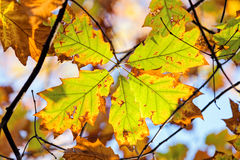 Leaves in the park Royalty Free Stock Photo