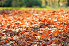 Leaves in the park Stock Image