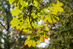 Leaves in the park Royalty Free Stock Photos
