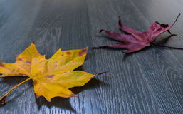 Leaves on parquet Royalty Free Stock Photography
