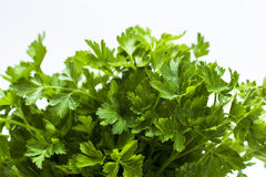 Leaves of parsley Royalty Free Stock Image