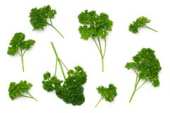 Leaves of Parsley Isolated on White Background Royalty Free Stock Images