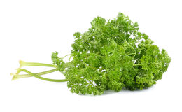 Leaves of parsley on white background Royalty Free Stock Images