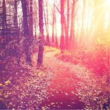 Leaves on path through trees with setting sun Stock Photo