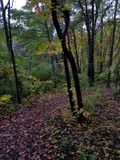 Early Fall colors in Ohio. Leaves path woods yellow green red woods Royalty Free Stock Photography