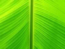 Leaves pattern on background royalty free stock image
