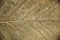 Leaves. Pattern of dry leaves Royalty Free Stock Images