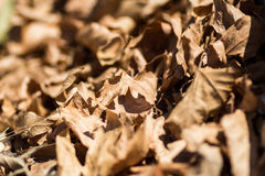 Dry leaves background Stock Photo
