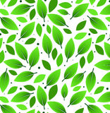 Leaves Pattern Illustration. With white background Royalty Free Stock Photos