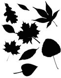 Leaves pattern set Royalty Free Stock Images