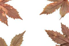 Leaves and patterns of dark and red picture frames royalty free stock images