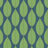 Leaves Patterns. Stock Image