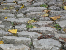 Leaves on the pavement. Autumn leaves on the road from a stone blocks Stock Photos