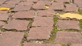 Leaves on pavement in autumn stock video footage